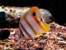 Sealife Stockbild