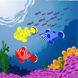 Sealife Arkivbild