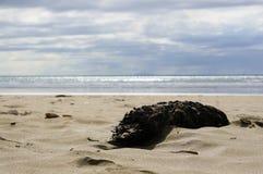 Sealife Fotografia Stock