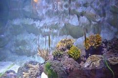 Sealife Immagini Stock Libere da Diritti