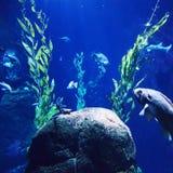Sealife Aquarium at Blijdorp. Rotterdam zoo nature blueheaven stock photo