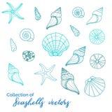 Sealife bonito s, coleção de vários moluscos, estrela do mar, caracol, diabrete - grande para projetos subaquáticos e do miritim, ilustração do vetor
