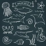 Sealife chalkboard set 2 Stock Photography