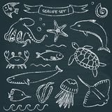 Sealife chalkboard set 1 Stock Photography