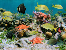 Sealife in a coral reef. Sea life in a coral reef with school of tropical fish and starfish royalty free stock image