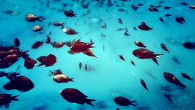 Sealife. Life under the water. Water is full of different kind of fish. Greece royalty free stock images