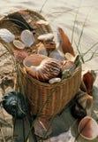 sealife na piknik Zdjęcia Royalty Free