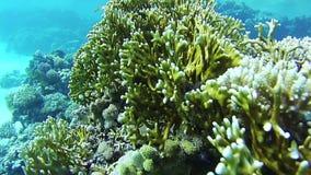 Sealife no Mar Vermelho, Egito filme