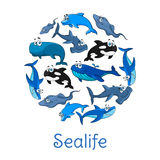Sealife poster with vector sea and ocean fishes Stock Images