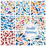 Sealife seamless vector pattern of cartoon fish. Vector cartoon sea fish and ocean animals seamless pattern of stingray and penguin, turtle, clown fish or Royalty Free Stock Image