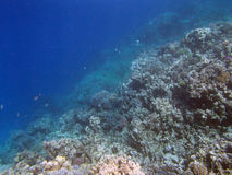 Sealife. Snorkeling in the red sea near hurghada Royalty Free Stock Photos