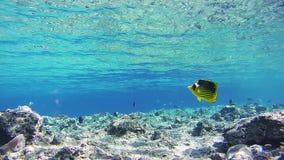 Sealifeachtergrond in het Rode Overzees, Egypte stock video
