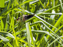 Sealing Beak Bird Royalty Free Stock Images