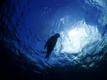 Sealion. In the blue sea with sunlight Royalty Free Stock Photos