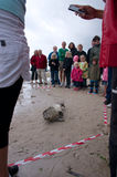 Sealion on beach with spectators around Stock Photography