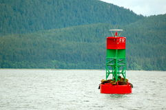 Sealion Bouy Stock Images