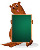 A sealion holding an empty blackboard Royalty Free Stock Image
