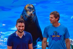 Sealion posing with coach and public person on lightblue water background at Seaworld. stock photo