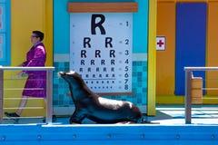 Sealion som uppmärksamt lyssnar till läraren i den havsLion High The New Class showen på Seaworld 1 royaltyfri foto