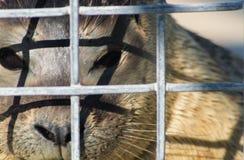 Sealpup Behind Bars Stock Photo