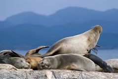 Seals Stock Images
