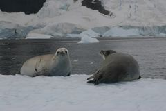 Seals stock photography