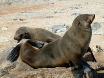 Seals Stock Image