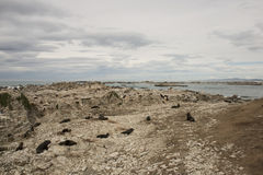Seals on a beach New Zealand Royalty Free Stock Photos