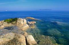 Seals beisde rocks Stock Images