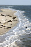 Seals bench between dutch islands Terschelling and Ameland Stock Images