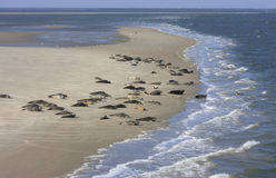 Seals bench between Terschelling and Ameland royalty free stock photo