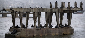 Seals and birds on a ruined structure Royalty Free Stock Images