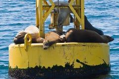 Seals on a buoy Stock Photos