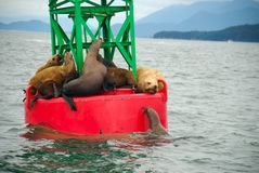 Seals on buoy in Alaska Royalty Free Stock Photography