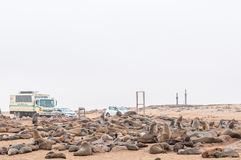 Seals at Cape Cross with replicas of Diogo Cao cross Royalty Free Stock Images