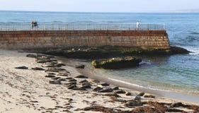 Seals at the Children s Pool Beach in La Jolla, California Royalty Free Stock Photos