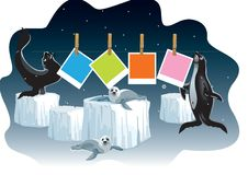 Seals dry photo frames Royalty Free Stock Photography