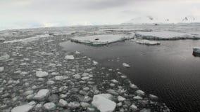 Seals on ice floe snow in ocean of Antarctica. stock video footage