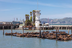 Seals at Pier 39 Forbes Island Royalty Free Stock Image