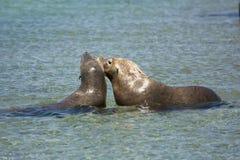 Seals playing stock photos