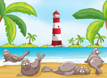 Free Seals Relaxing On The Beach Stock Image - 71398691