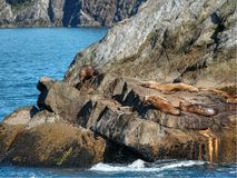 Seals relaxing on the rocks stock photos