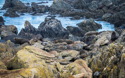 Seals Resting Area Stock Photo