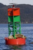 Seals Resting On Buoy In Junea Stock Photography