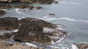 Seals resting on rocks coast of Cornwall The Kelseys near Holywell Bay stock video footage