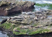 Seals on a Rock. A group of seals lounging on a large rock in the middle of the ocean Stock Photo