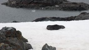 Seals on rock snow coastline in ocean of Antarctica. stock footage