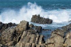 Seals On Rocks Royalty Free Stock Photo