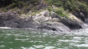 Seals on rocky coast of ocean on background of amazing nature in New Zealand. Seals on rocky coast of ocean in New Zealand. Scenic peaks and ridges. Travel and stock video footage