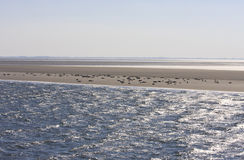 Seals upon sand bench between Terschelling and Ameland Stock Image